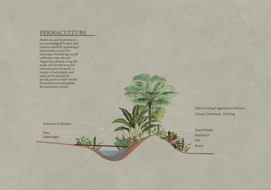 Seaside Collective Permaculture